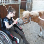 Brossage d'un poney